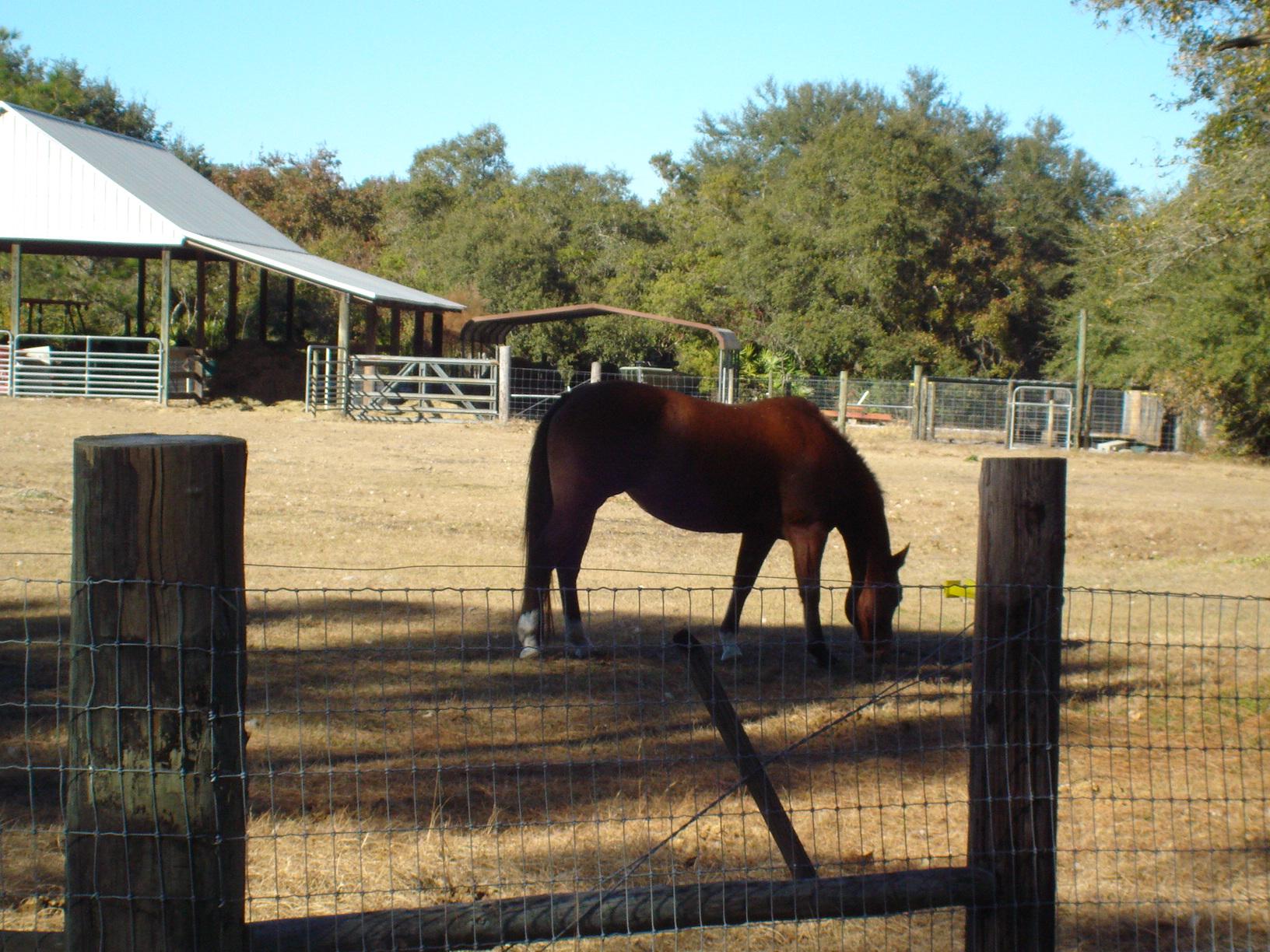 6.33 acres for sale deland florida